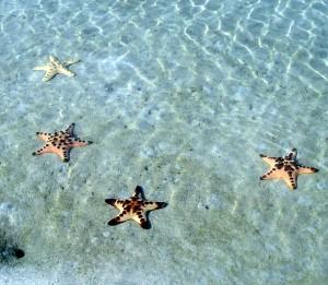 令人感悟人生的捡海星故事